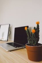 laptop sitting on a table with a cactus plant